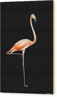 Flamingo On Black Wood Print by Avian Resources