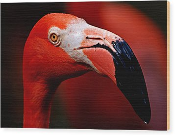 Wood Print featuring the photograph Flamingo Portrait by Lorenzo Cassina