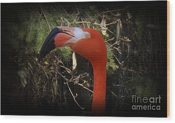 Flamingo Profile Wood Print by Sara  Raber