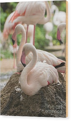 Flamingo Rest On Ground Wood Print by Tosporn Preede