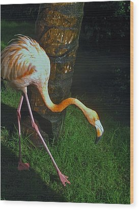Flamingo Search Party Wood Print