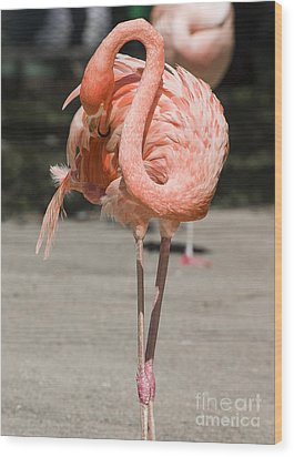 Flamingo Wood Print by Steven Ralser