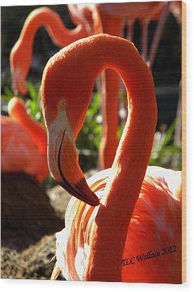 Flamingo Wood Print by Tammy Wallace