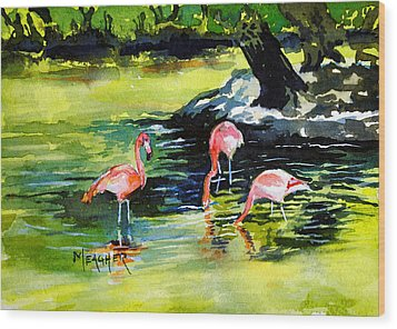 Flamingos At The St Louis Zoo Wood Print by Spencer Meagher