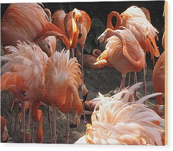 Wood Print featuring the photograph Flamingos by Beth Vincent