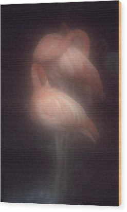 Flamingos Wood Print