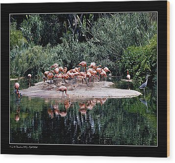 Wood Print featuring the photograph Flamingos Colony by Pedro L Gili