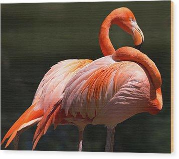 Flamingos Wood Print by John Kunze