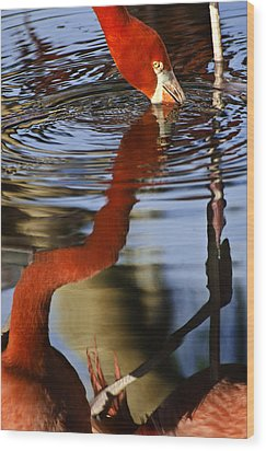 Flamino Reflections 1 Wood Print by Dave Dilli
