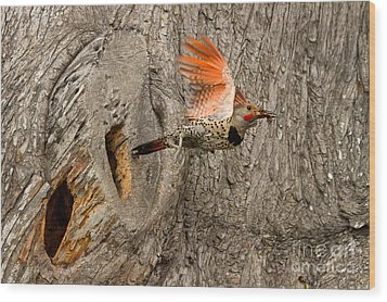 Flicker Flight Wood Print by Alice Cahill