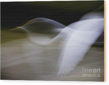Flight Of Fancy Wood Print by Anne Rodkin