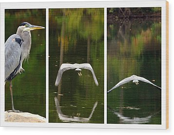 Wood Print featuring the photograph Flight Of The Crane by Davina Washington
