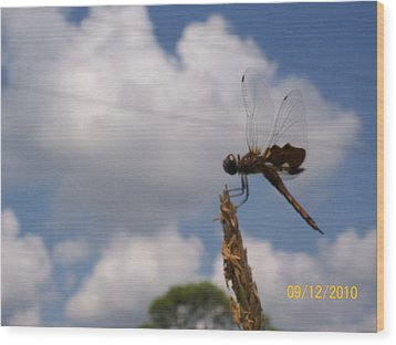 Wood Print featuring the photograph Flight Of The Dragonfly by Belinda Lee