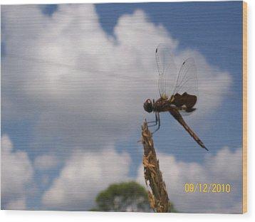 Flight Of The Dragonfly Wood Print by Belinda Lee