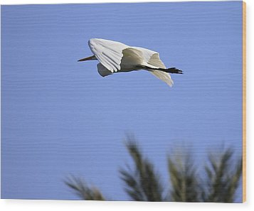 Wood Print featuring the photograph Flight Of The Egret by Penny Meyers