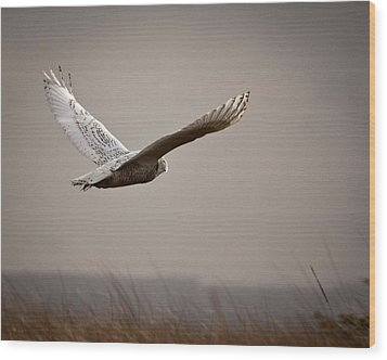 Wood Print featuring the photograph Flight Of The Snowy Owl by Erin Kohlenberg
