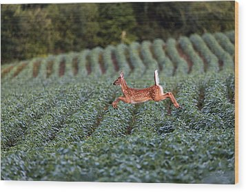 Flight Of The White-tailed Deer Wood Print