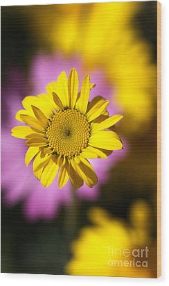 Wood Print featuring the photograph Floating Daisy by Joy Watson