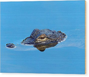 Wood Print featuring the photograph Floating Gator Eye by Chris Mercer