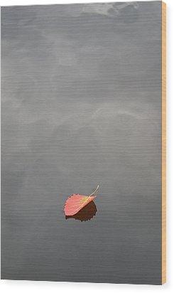 Floating Jewel Wood Print by Jake Barbour