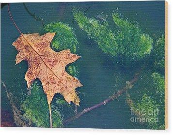 Floating Leaf  Wood Print by Karen Adams