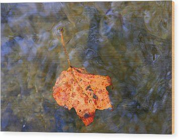 Floating Leaf Wood Print by Paula Tohline Calhoun