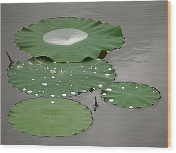 Floating Lotus Leaves Wood Print