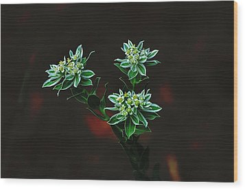 Floating Petals Wood Print