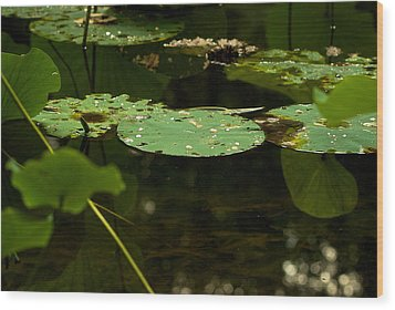 Wood Print featuring the photograph Floating World 1 - Lily Pads  by Jane Eleanor Nicholas