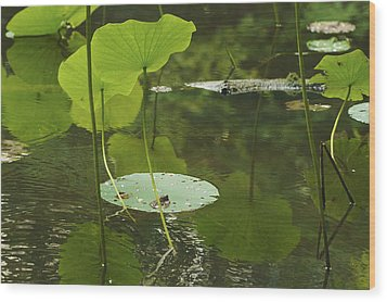 Wood Print featuring the photograph Floating World #2 - Lotus Leaves Art Print by Jane Eleanor Nicholas