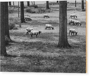 Flock Of Sheep Wood Print