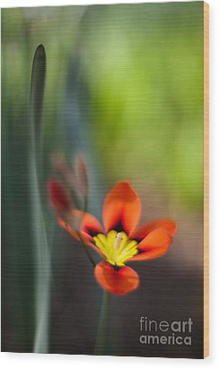 Flora Counterpoint Wood Print by Mike Reid