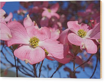 Floral Art Print Pink Dogwood Tree Flowers Wood Print by Baslee Troutman