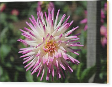 Wood Print featuring the photograph Floral Beauty 3  by Christy Pooschke