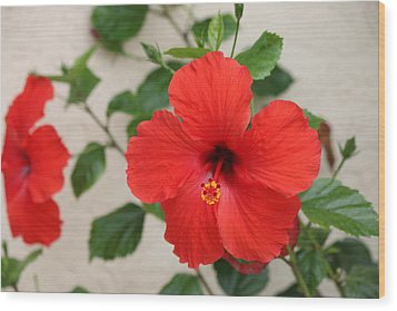Wood Print featuring the photograph Floral Beauty  by Christy Pooschke