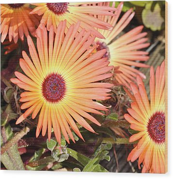 Wood Print featuring the photograph Floral by Cathy Mahnke