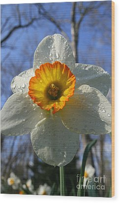 Floral Dew  Wood Print by Neal Eslinger