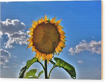 Floral Sunshine Wood Print by Larry Trupp