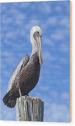 Florida Brown Pelican Wood Print by Kim Hojnacki