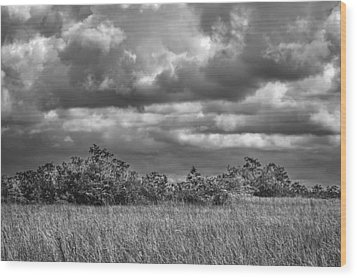 Florida Everglades 0184bw Wood Print by Rudy Umans