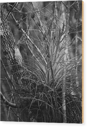 Wood Print featuring the photograph Florida Everglades by Joseph G Holland