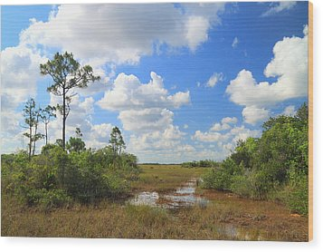 Florida Everglades Wood Print by Rudy Umans