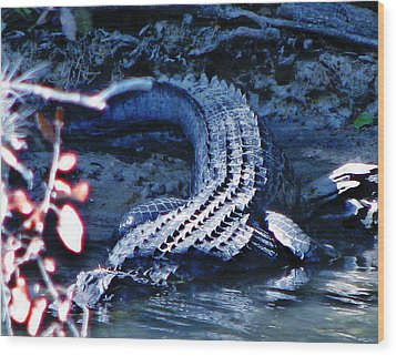 Florida 'gator Wood Print by Jp Grace