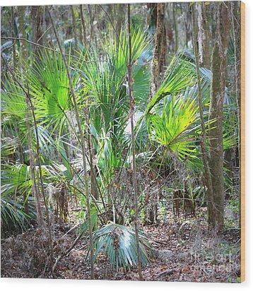 Florida Palmetto Bush Wood Print by Carol Groenen