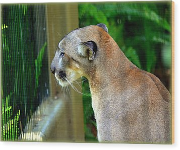 Florida Panther Wood Print by Amanda Vouglas