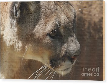 Wood Print featuring the photograph Florida Panther by Meg Rousher