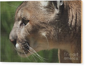Wood Print featuring the photograph Florida Panther Profile by Meg Rousher