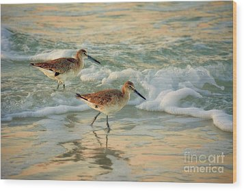 Florida Sandpiper Dawn Wood Print by Henry Kowalski