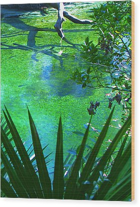 Florida Swamp With Driftwood Wood Print by Jp Grace