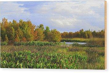 Florida Wetlands August Wood Print by David Mckinney